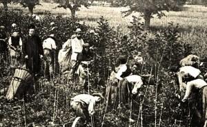 Eccellenze di Calabria: Quando la seta era un prodotto principe.
